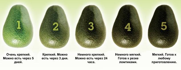 выбор зрелого плода