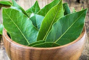 листья в пиале