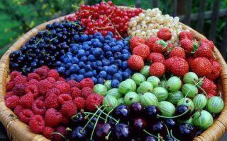 ягодные разновидности