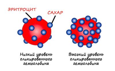 низкий и высокий уровень гемоглобина