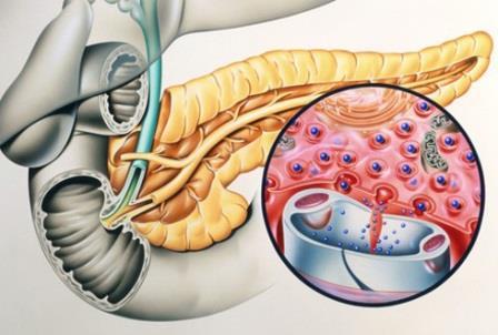 Что показывает анализ на инсулин, как сдавать кровь правильно