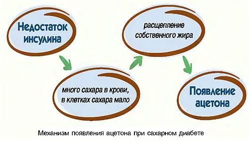 механизм появления ацетона в организме